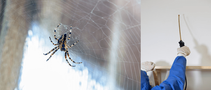 Expert Spider Control Service