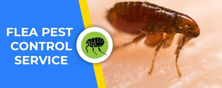 Flea Control Aveley